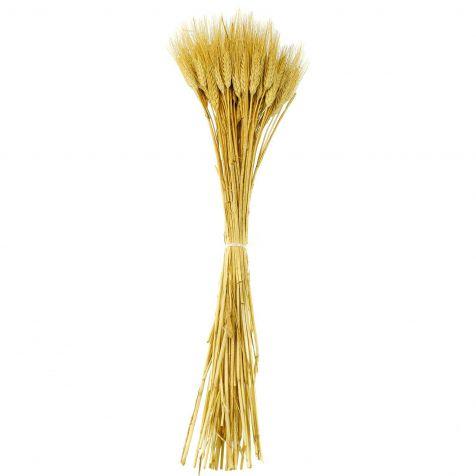 Bouquet botte de blé barbe blonde - 65 cm